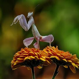 Lets Dance by Arie Azdhana - Abstract Macro