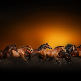 THE HERD by Nasser Osman - Digital Art Animals ( blurred background, horses, herd, fine art, nasser osman )