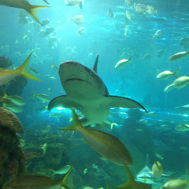 Plenty of fish by Crystal Fletcher - Animals Sea Creatures