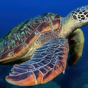 Turtle-13 Bea.jpg