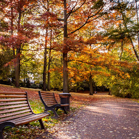 serenity by Anita  Christine - City,  Street & Park  City Parks ( citypark, tree, nature, autumn, bremen, germany, , bench, pwc )