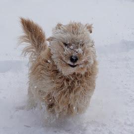 by Dyan Brisson - Animals - Dogs Running