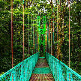Monteverde Rainbow Bridge by Norma Brandsberg - Buildings & Architecture Bridges & Suspended Structures ( vertical, monteverde cloud forest, photograph, family friendly, www.elegantfinephotography.com, vertical perspective, tree, metal, photographer, walkway, perspective, flower, orange, foggy day, horizon, rainforest, winter, vacation, photo tour, award winning, mosses, view, place to visit, walk, plant, rainbow color, colorful, moss, landscape, norma brandsberg, photography, path, costa rica, length, colored, national reserve park, pathway, purple, vision, green, cable, suspension, swinging bridge, ferns, nbrandsberg@gmail.com, red, blue, vista, garden )