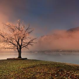 Morning at the lake by Cvetka Zavernik - Landscapes Sunsets & Sunrises ( winter, lake, sunrise, morning )