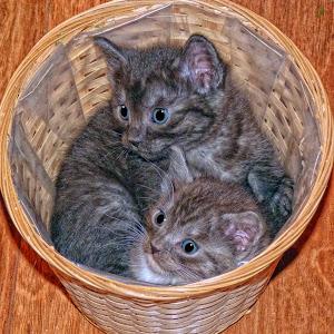 Basket of Kittens.jpg