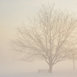 by Diana Margan - Landscapes Weather