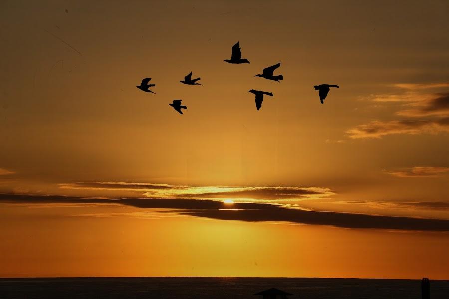 by Debb Nelson - Landscapes Sunsets & Sunrises