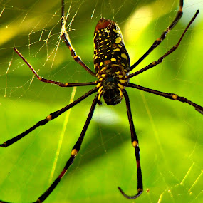 by Raajesh Thakur - Animals Insects & Spiders