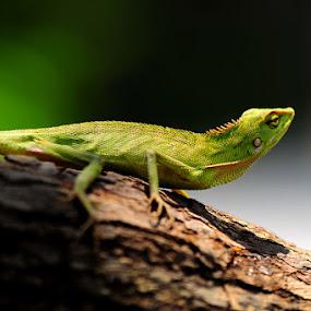 by Mark Louie Meru - Animals Reptiles