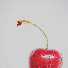Cheery Cherry  by Seashadow Houseye - Food & Drink Fruits & Vegetables