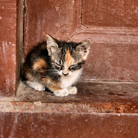 alone-, by Laelatus Silmi - Animals - Cats Kittens