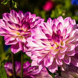 Wilhelma by Zoran Osijek - Flowers Flower Gardens