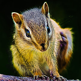 Chipmunk Digital by Dave Lipchen - Digital Art Animals