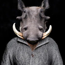 William the Warthog by Michal Challa Viljoen - Digital Art Animals ( person, zoo, advertising, edit, grey, campaign, composite, photography, warthog, photoshop, animal,  )
