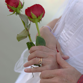 2 roses by Annette Gregory - Wedding Other ( hands, wedding, roses, rings )