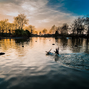 Late Afternoon at Alexandra Palace by Matt Cooper - City,  Street & Park  City Parks ( sunset, duck, cloud, trees, pond )