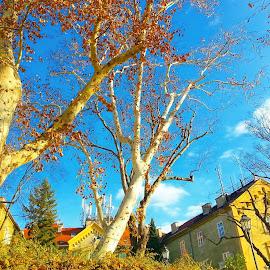 Rise by Martina Martinec - Uncategorized All Uncategorized ( blue sky, nature, zagreb, skies, travel, rise, trees )