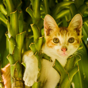 stucked by Gi Masangya - Animals - Cats Kittens ( cat, kitten, nikon d3100, nature, nikon, feline, philippines, small, photography, animal )