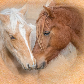 Best Friends by Robert Mullen - Animals Horses ( field, pasture, equine, horses, horse, stables )