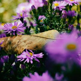by K Csilla - Nature Up Close Gardens & Produce