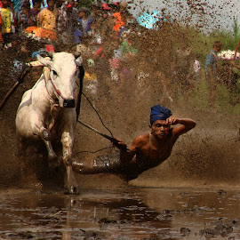 only 1 second by Muhammad Alfariz - Sports & Fitness Rodeo/Bull Riding ( #culture, #minangkabautribe #minangkabau #tanahdatar #sumatera #, #sport #indonesia #cowrace #pacujawi #brown #sport # )