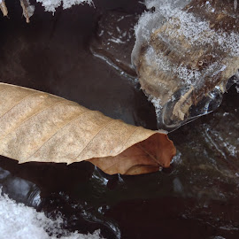 Leaf Fold by Mark Mynott - Nature Up Close Leaves & Grasses ( water, natural light, stream, winter, ice, snow, current, nature up close, leaf, frozen, new hampshire )
