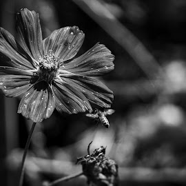 Homecoming  by Todd Reynolds - Black & White Flowers & Plants