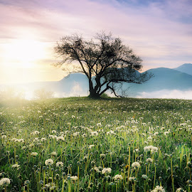 Summer time by Ivailo Atanasov - Landscapes Mountains & Hills ( clouds, field, hills, mountain, tree, plants, sunrise, landscape, flower )