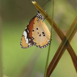 Butterfly by Abhijit Kulkarni - Novices Only Macro