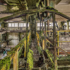 People have gone - nature comes by Martin Namesny - Buildings & Architecture Decaying & Abandoned ( old, hall, industrial, moss, factory, forgotten, abandoned )