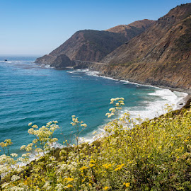 PCH 2 by Mark Ritter - Landscapes Beaches ( water, hills, pch, trees, pacific, ocean, rocks, coast )