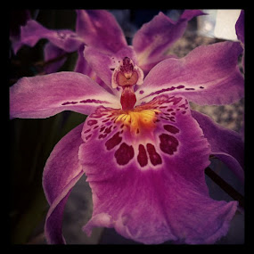 by Joey Chen - Instagram & Mobile Instagram ( sleeping fairy, purple orchid, flower )