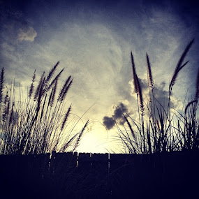 by Jamie Myers - Instagram & Mobile Instagram ( grass, sky, sunlight, sunshine, sky )