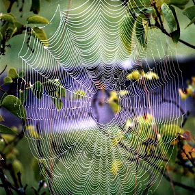 Web Prefection by Tina Dare - Nature Up Close Webs ( nature, web, close up, spider web,  )