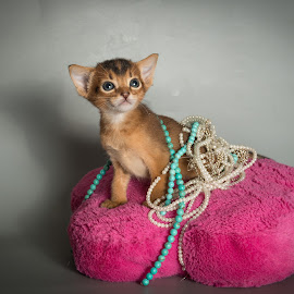 PRINCESS  by Rita Bruche - Animals - Cats Kittens ( cat, jewellery, aby, tawny, kittens, abyssinian )