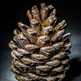 Table Top Pine Cone by Ken Brown - Nature Up Close Other Natural Objects ( plant, detail, macro, pine cone, nature, dried, still life, brown, portrait, close-up, opened )