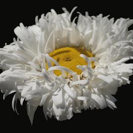 by Darrell Tenpenny - Digital Art Things (  )
