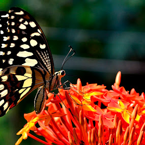 Its breakfast time by Prasant Kumar - Animals Insects & Spiders