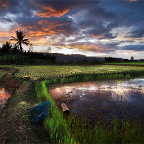 ...Y.... by Jeerasak Chaisongmuang - Landscapes Sunsets & Sunrises ( sunset rice reflex thailand )