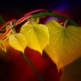 by Davis L. Antonio - Nature Up Close Leaves & Grasses ( pwcfallleaves )