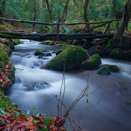 under the bridge. by Mike Looby - Landscapes Waterscapes