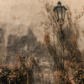 Lamp On Wall by Adam Lang - Artistic Objects Other Objects ( street, plant pots, plants, lamp, wall )