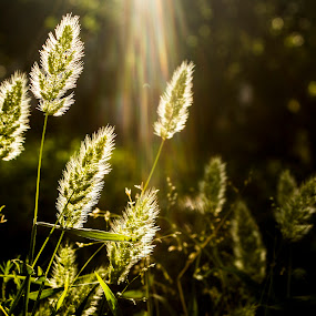 by Umair Khan - Nature Up Close Leaves & Grasses