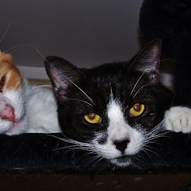 Jffa And Reggie by Sarah Harding - Novices Only Pets ( cats, animals, pets, novices only, portrait )