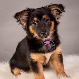by Myra Brizendine Wilson - Animals - Dogs Portraits ( canine, foster kosse, foster dog, kosse, pet, foster, gcspca, dog, greater charlotte spca, foster dog kosse )