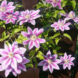 For pleasure by Helena Moravusova - Flowers Flower Gardens ( flowers, nature, garden )