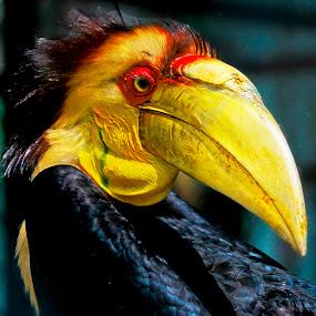 Ramgkong Badak by Palti Siregar - Animals Birds
