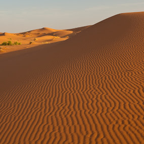 Rippled Dune by Peter Podolinsky - Landscapes Deserts
