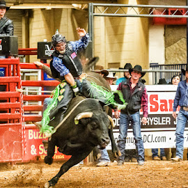 by Christopher Winston - Sports & Fitness Rodeo/Bull Riding ( cowboy, texas, rodeo, competition, animal, bull riding )