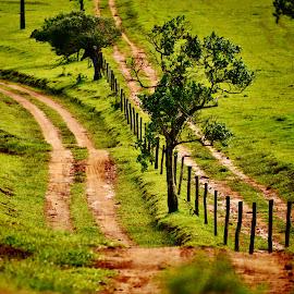 Pardinho SP Brazil  by Marcello Toldi - Landscapes Prairies, Meadows & Fields